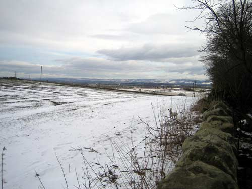A snowy view of the top of Carberry Hill