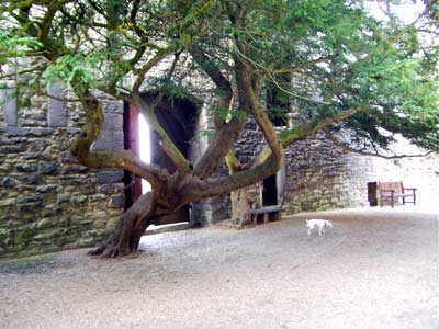 Tree growing in the inner courtyard